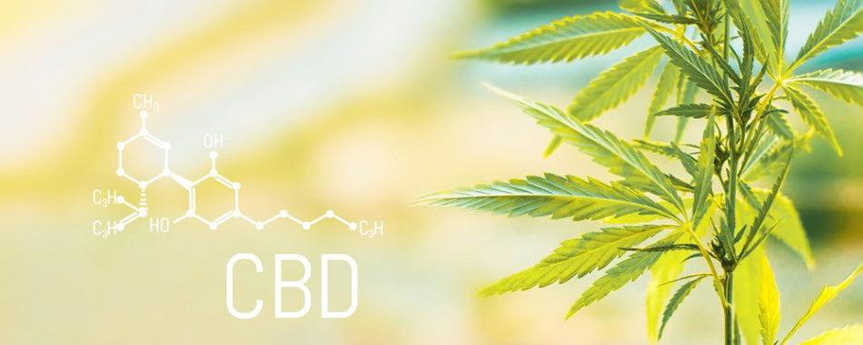 Cannabidiol (CBD) bei Hashimoto-Thyreoiditis: Studien und wichtige Hinweise