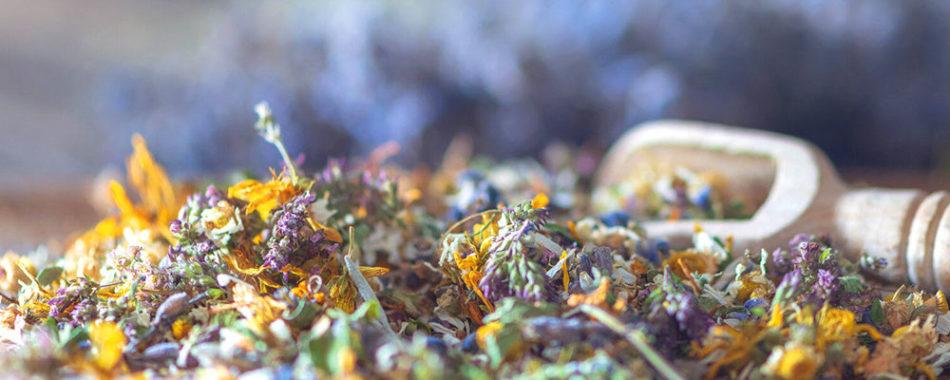 Heilpflanzen bei Hashimoto: Was hilft bei einer Unterfunktion der Schilddrüse?
